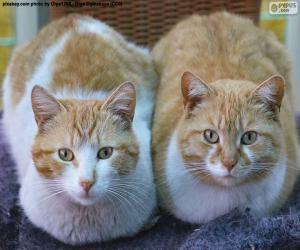 """Картинки по запросу """"две кошки фото"""""""""""