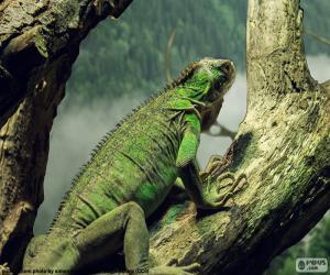 Пазлы рептилии